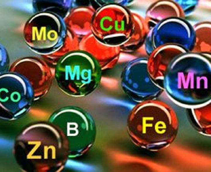 Kimyasal Toksisite Ağır Metaller